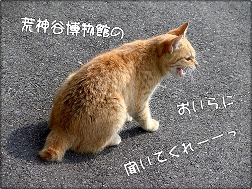xQs9x7Q2J9yHAdo.jpg