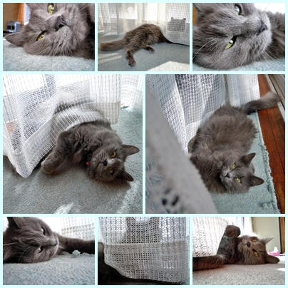 cats 青.jpg