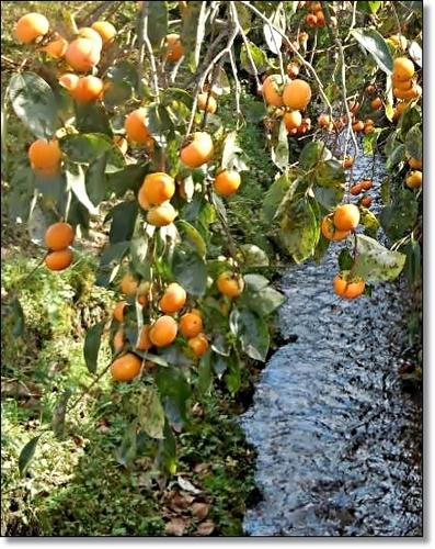 DSCN4236-crop.JPG