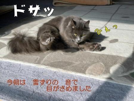 knNgiBznbmxNM_v.jpg