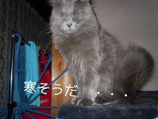 npkI0.jpg